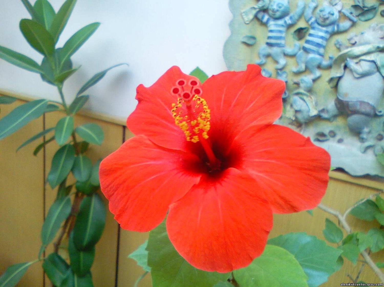 Цветы для дома фото и цена